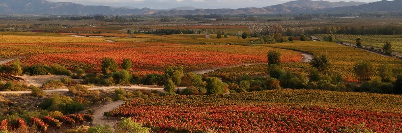 foto-valle-del-colchagua.jpg